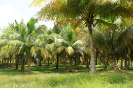 Old plantation